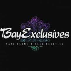 Bay Exclusives Sprinkles Galactic Gumball x Funfetti